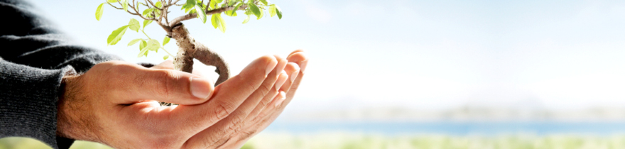 person's hands holding a minature tree